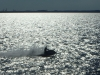 Sea-Doo im Gegenlicht