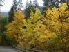 Herbstlicher Wald im Unterengadin